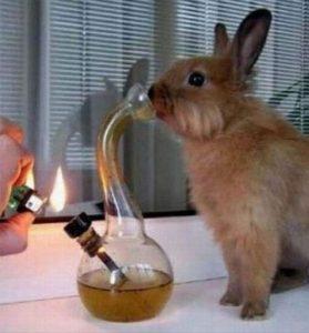 Stoner Bunny Bong Hits Meme