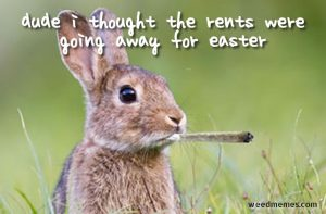 Stoner Bunny Home Alone Weedmemes