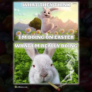 Stoned Easter Bunny Weed memes