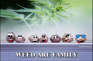 Weed Are Family Marijuana Seeds Happy Faces Weed Memes