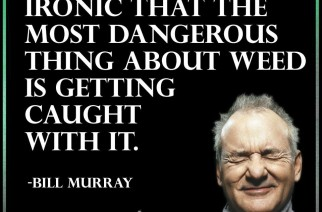 Bill Murray Most Dangerous Thing About Weed Quote