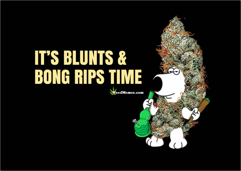 Brian Family Guy Blunts and Bong Rips Time Weed Memes