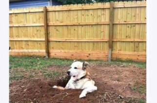Funny Dog in Hole Looking for Lost Stash of Weed Memes