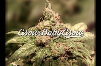 Grow, Baby, Grow Cannabis Grow Your Own Weed Quotes