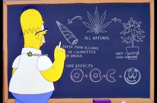 Homer Cartoon Cannabis Facts WeedMemes