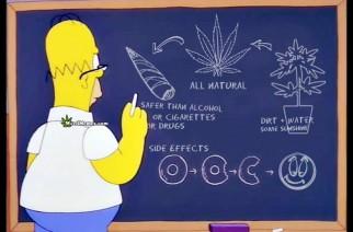 Homer Simpson Weed Memes Cannabis 101 Lesson