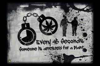 Marijuana Arrests Stats Legalize A Plant Weed Memes