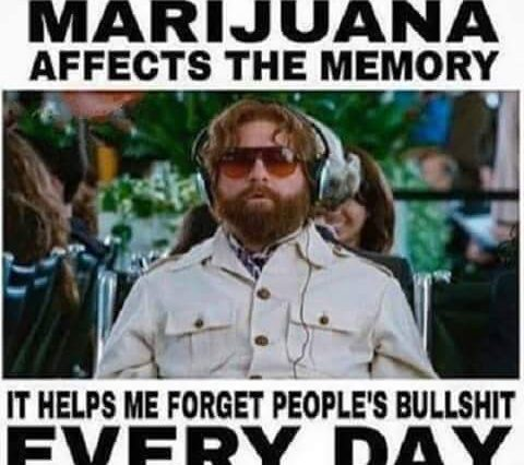 marijuana memory forget bs weedmemes 480x426 zach galifianakis weed memes weed memes