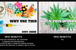 Pharmaceutical vs Cannabis Weed Memes