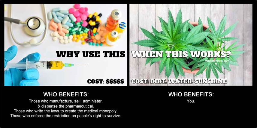Why Pharmaceuticals When Cannabis Works Legalize Weed Memes