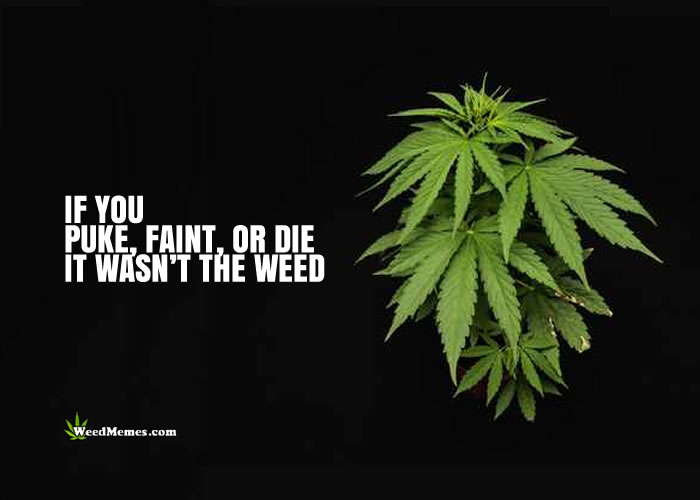 If You Puke Faint or Die, It Wasn't The Weed Marijuana Quotes