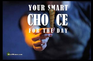 Your Smart Choice For The Day Smoke Blunt Memes