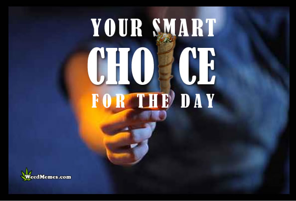 Smart Choice Smoke Blunt Quotes