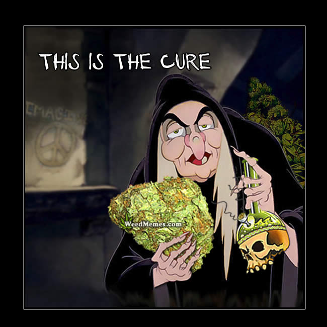 Weed Is The Cure Snow White Witch Cartoon Weed Memes