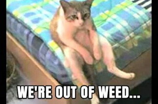 Stoner Cat Funny Weed Memes Out of Weed Pic