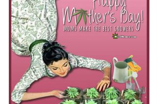 Stoner Happy Mother's Day Card Gift of Clones Weed Memes