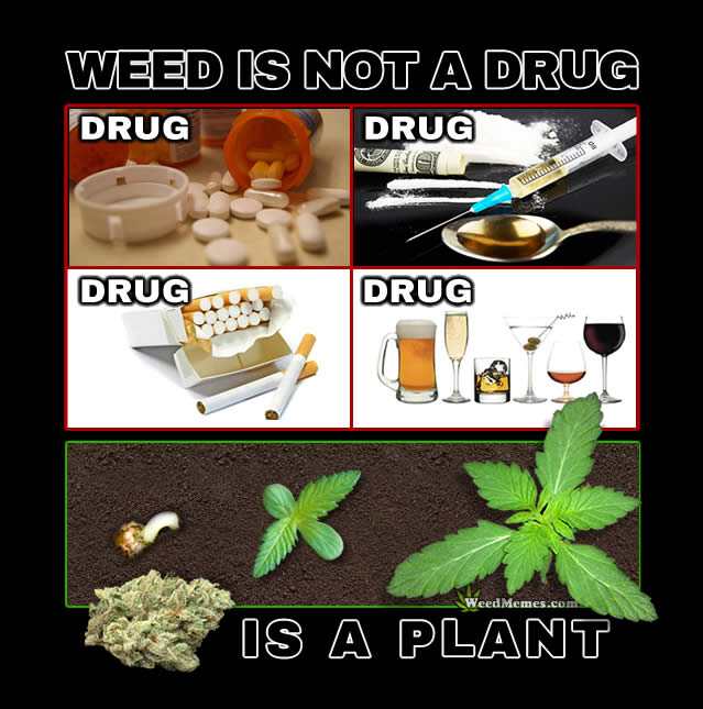 Weed Plant Not Drug Quote
