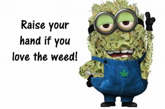 Marijuana Nug Minions Raise Your Hand If You Love The Weed Memes