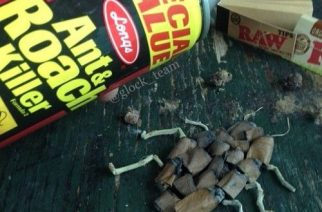 Roach Killer Funny Weed Pics