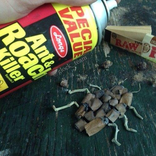 Roach Killer Funny Weed Pics