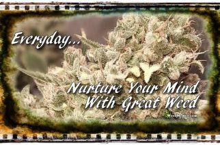 Smoke Weed Everyday Marijuana Quotes