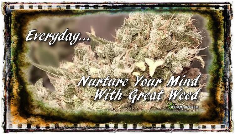 Smoke Weed Everyday Marijuana Quotes