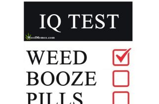 Stoner 420 IQ Test Weed vs Alcohol vs Pills – Weed Memes
