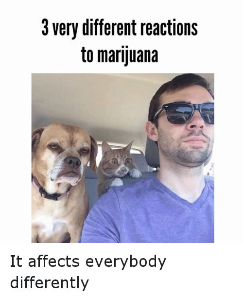 weed affects differently weed memes 3 different reaction to marijuana funny weed memes,Funny Meme Reactions