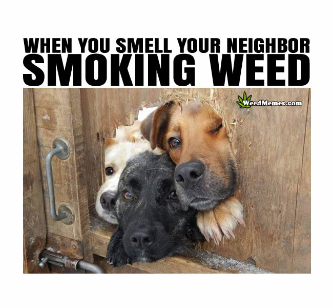 smell neighbor smoking weed memes when you smell neighbor smoking weed meme stoner dogs funny weed memes