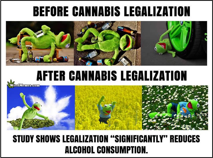 cannabis reduces alcohol consumption weedmemes truth about weed marijuana facts memes