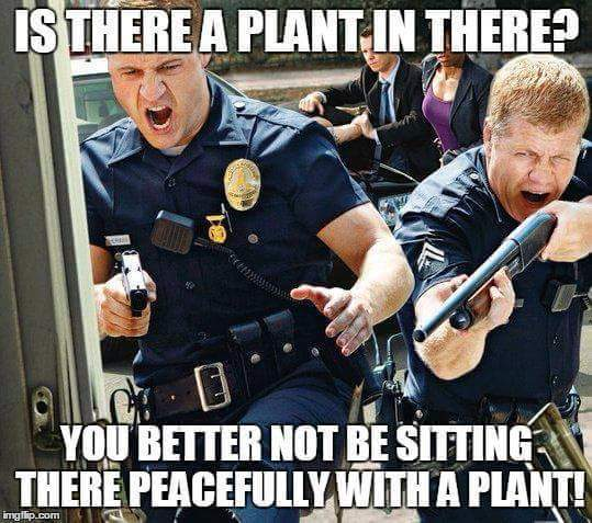 Cops Bust Marijuana Plant & Peaceful Stoner Weed Memes